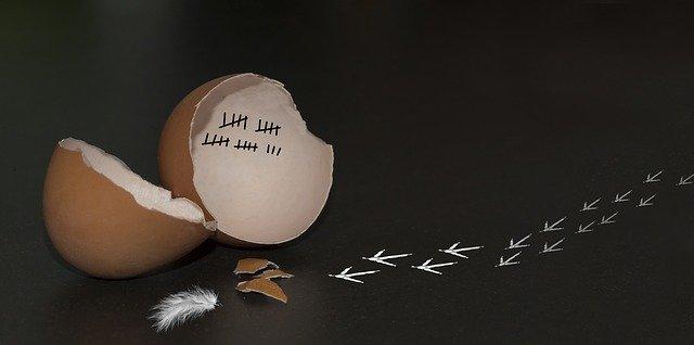 Homeoffice gebrochenes Ei, Fußspuren eines Kükens